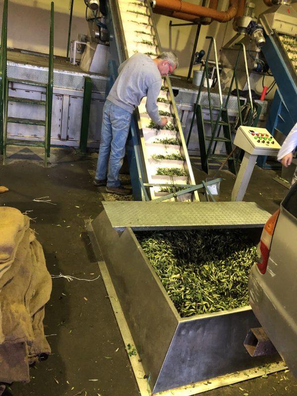 Reception des olives