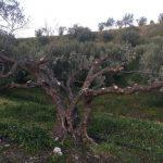 Les arbres après la taille