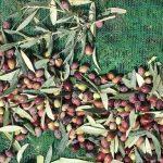 Olives du vert au violet